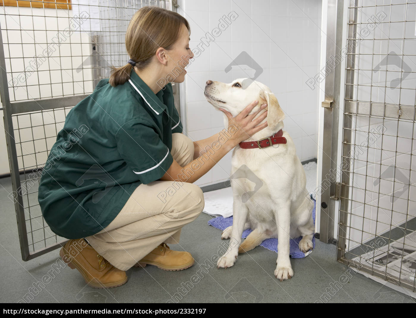 vetinary, nurse, checking, sick, animals, in - 2332197