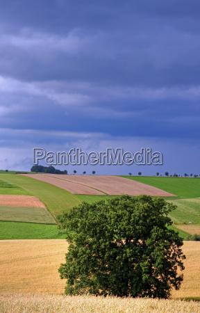 between corn and oat field