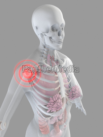female anatomy with highlighted shoulder
