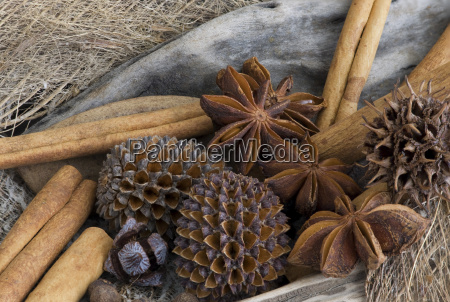seedpods and spices