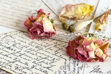 rosen, nostalgie - 2346351