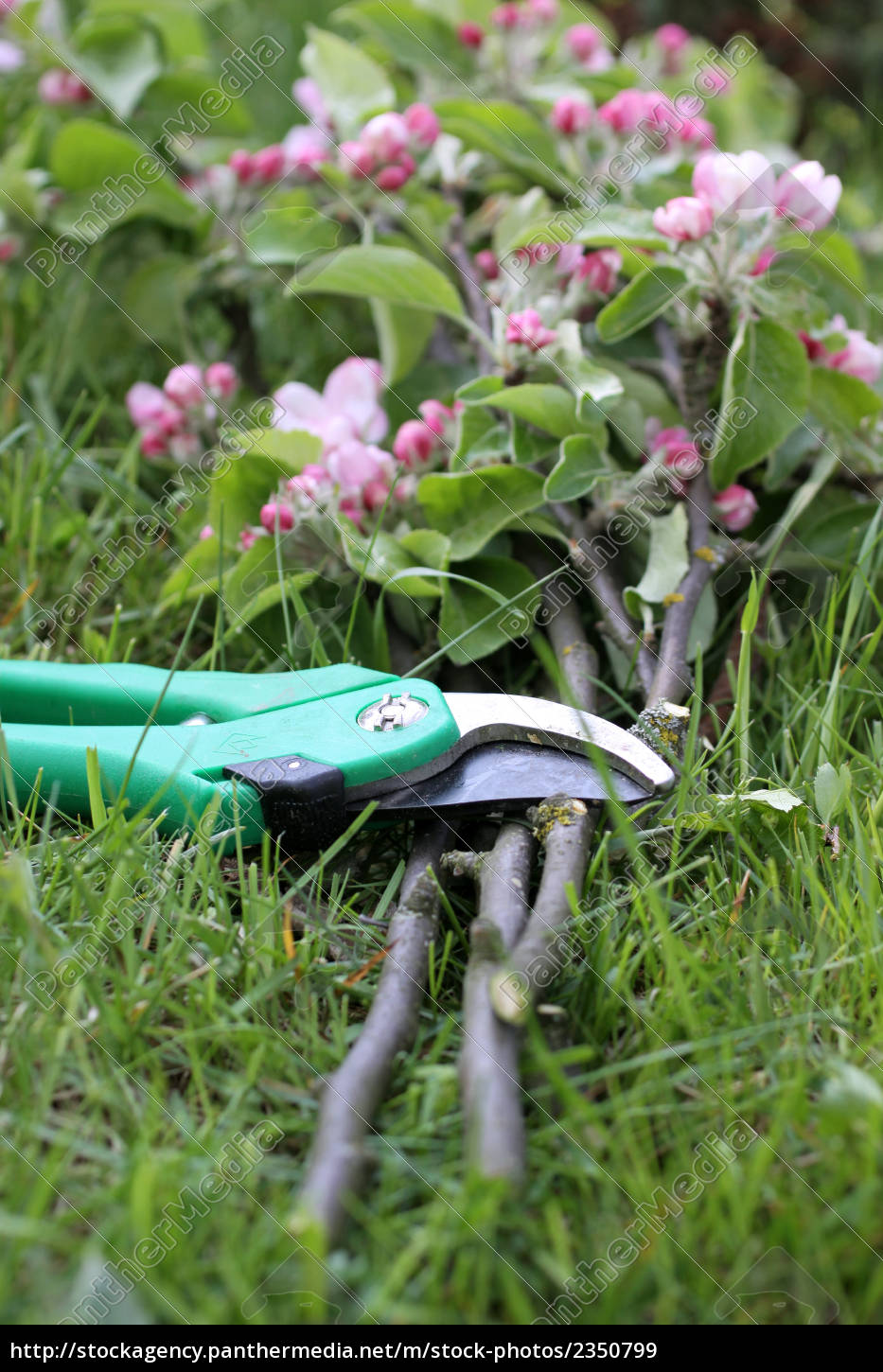garden, shears, with, branches - 2350799