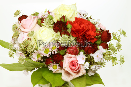 flower flowers plant cut flowers gift
