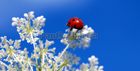 ladybeetle on top of a white