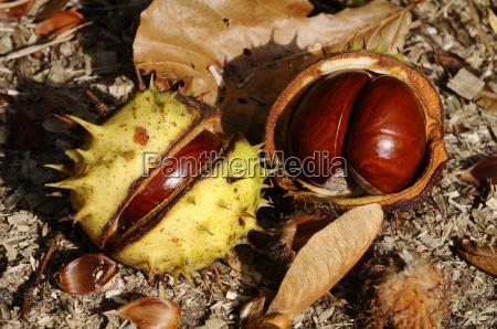 background, -, autumn, theme - 2386025