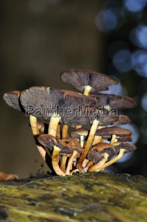 background fungi on dead tree