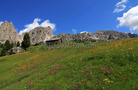 flower meadows in the mountains