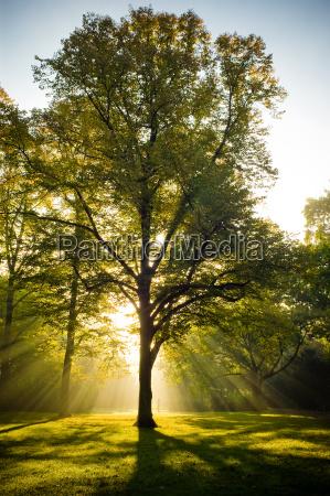 tree backlit