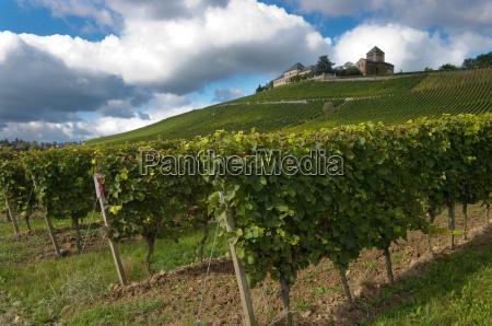 vineyard hesse winery rheingau
