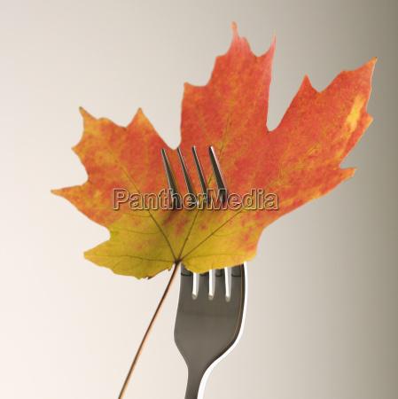 maple leaf on fork