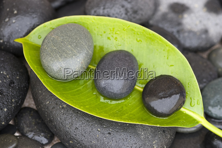 stones on green leaf