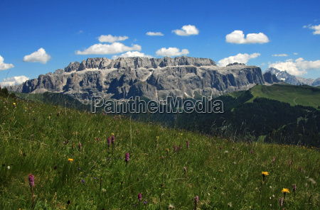 flower meadow and mountains