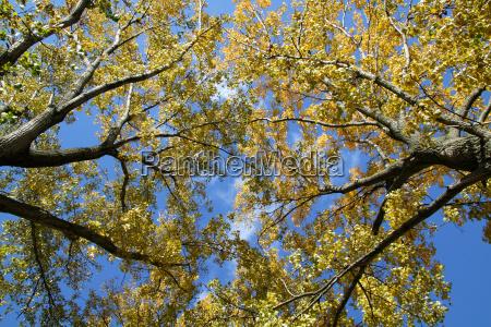 treetops in autumn