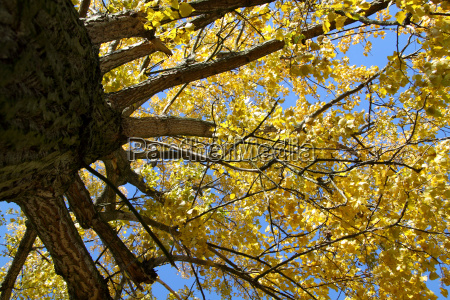 treetop in autumn