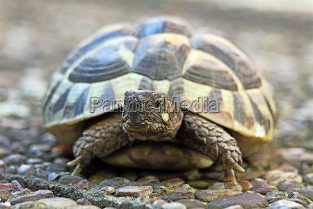 tortoise on stone floor