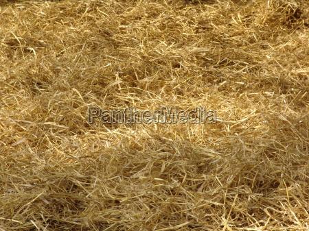 hay straw barn shadow