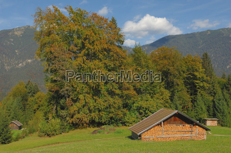 hut and autumn trees
