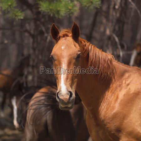 horse - 2536723