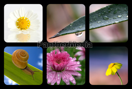 nature collage with nature elements