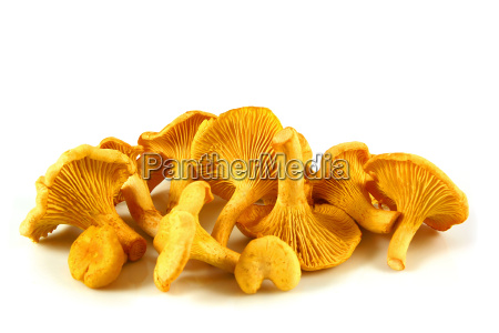 chanterelles, isolated - 2542989