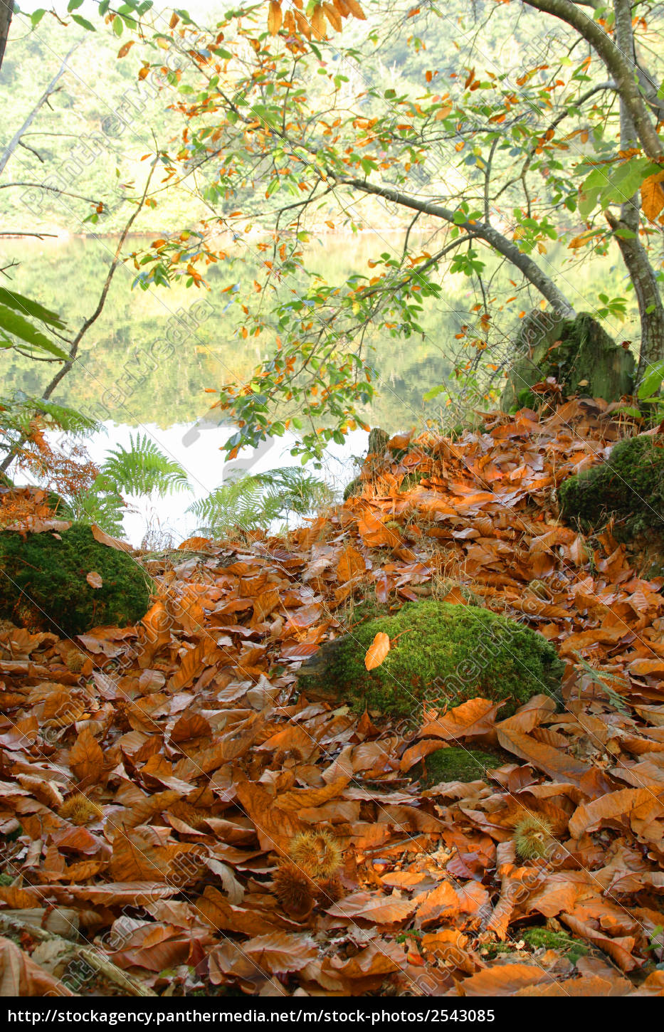 autumn, in, the, forest - 2543085
