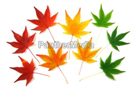 autumn, leaves - 2543087