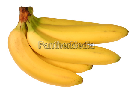 a bunch of bananas isolated on