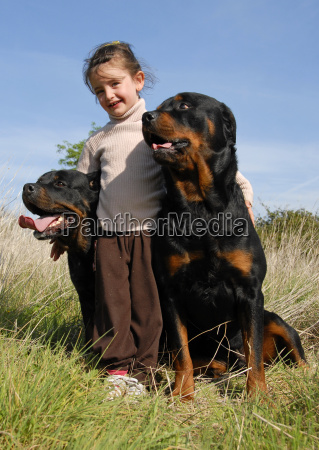 little girl and rottweilers