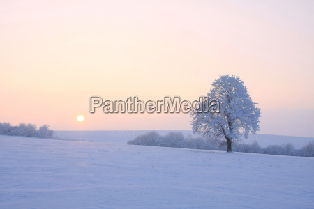 icy - 2630258