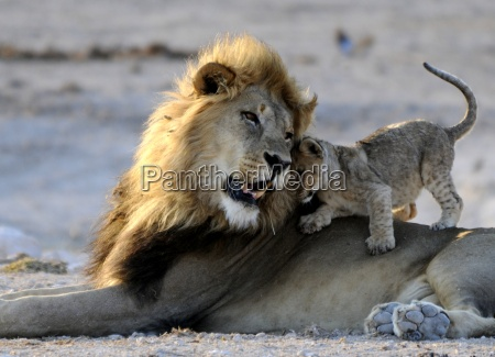 lion with puppy 1