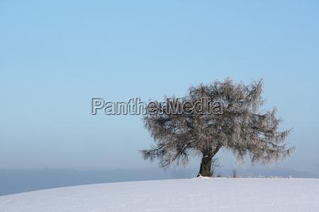 tree meadows snow