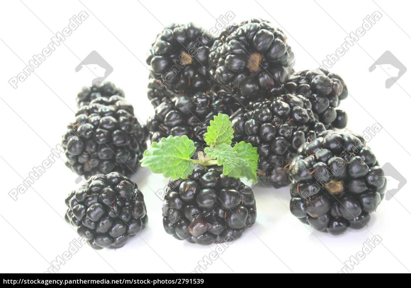 blackberries - 2791539