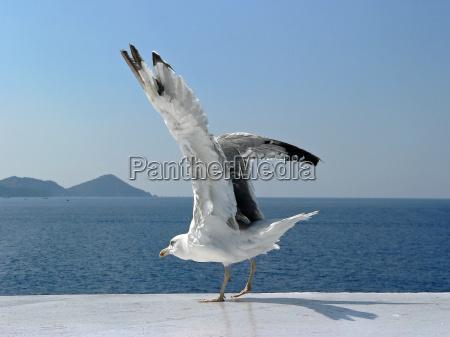 bird animals birds wing takeoff beginning