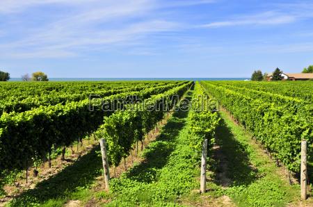 vineyard - 2806815