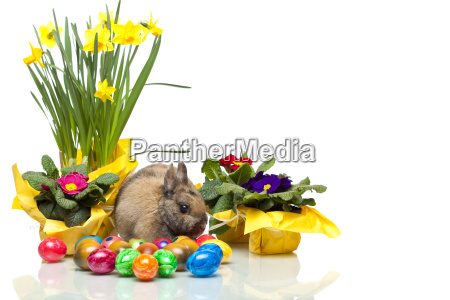easter, bunny, and, easter, eggs, narissen - 2807213