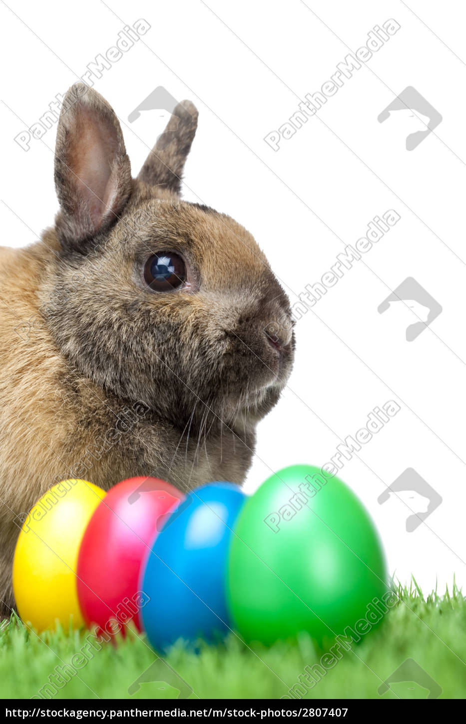 easter, bunny, with, colorful, easter, eggs - 2807407