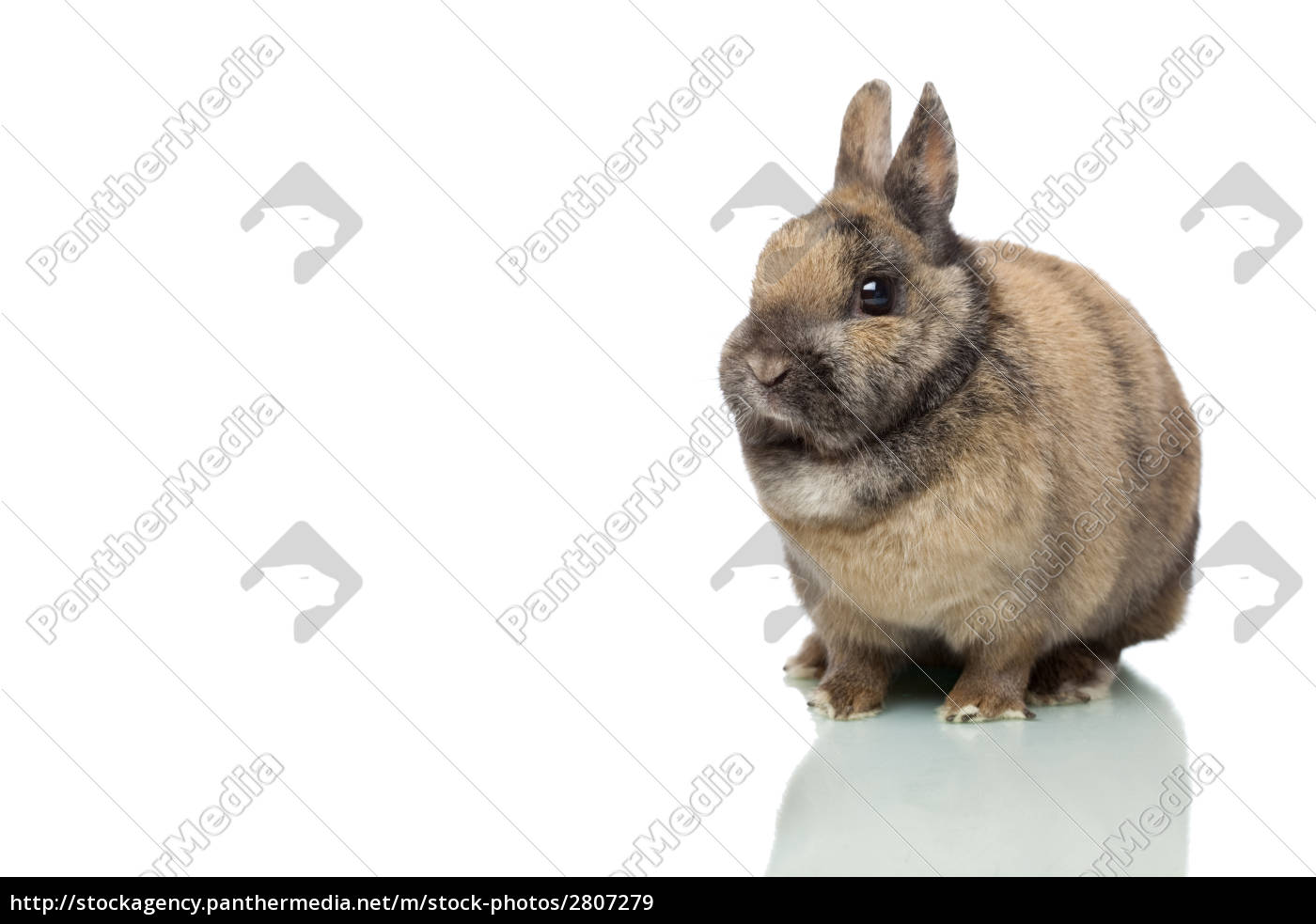 northern, hare, isolated, on, white - 2807279