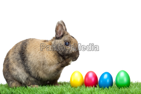 rabbits, with, easter, eggs, in, green - 2807367