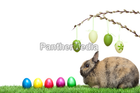 easter, bunny, sits, with, colorful, easter - 2808161