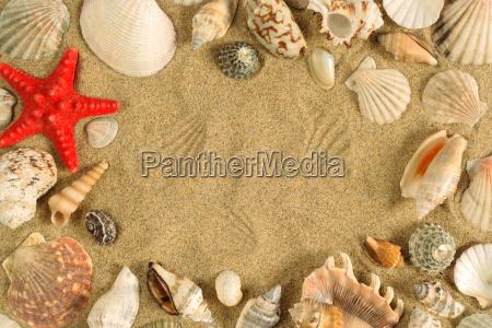 seashell, frame - 2808001