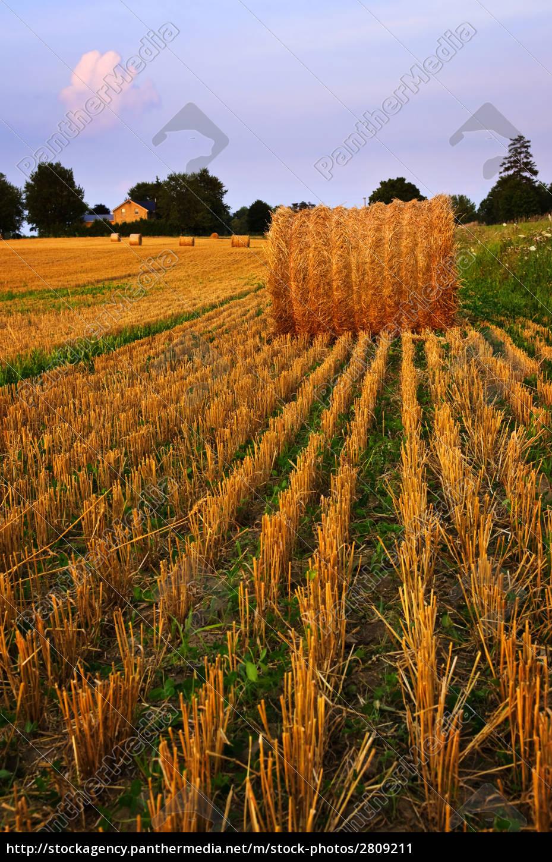 farm, field, at, dusk - 2809211