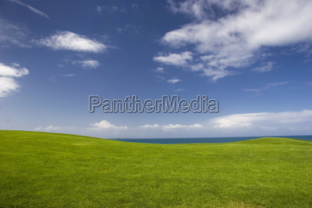 green, meadow - 2810005