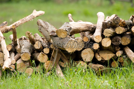 wood - 2812157