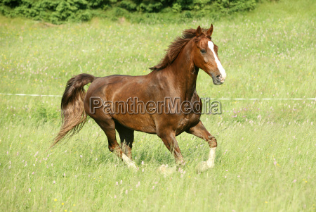 horse, galloping - 2813417