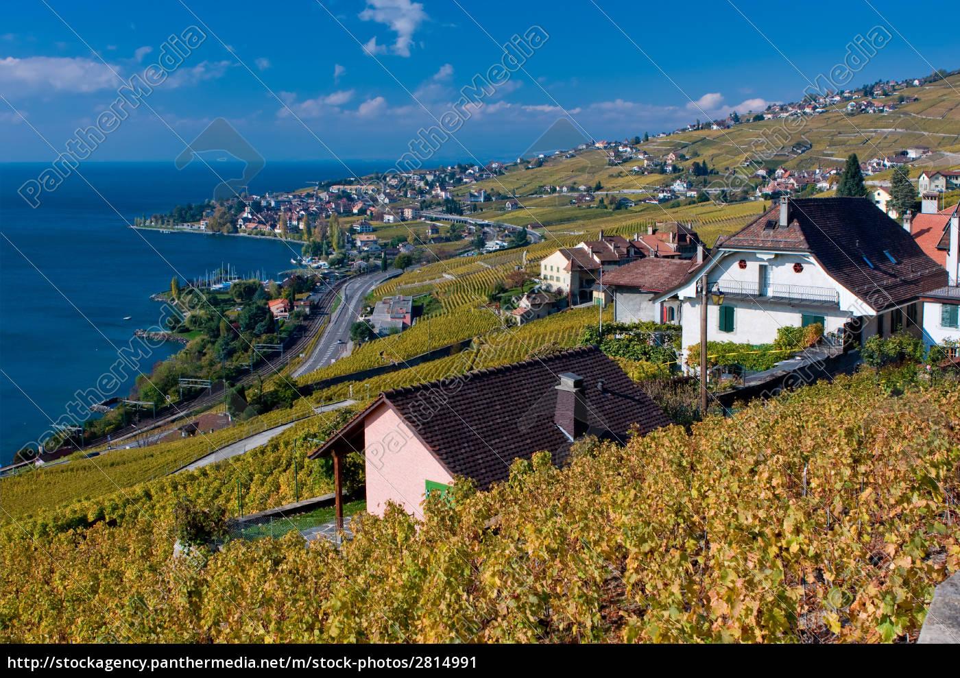 lavaux, vineyards, and, lake, geneva, in - 2814991