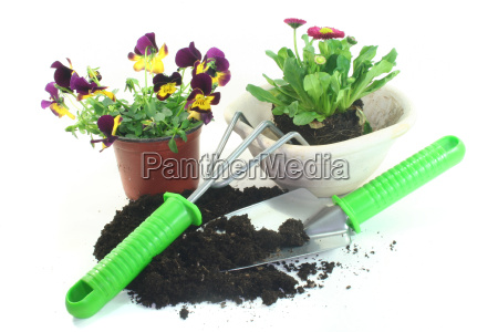 gardening with spring flowers