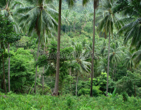 rainforest - 2830467