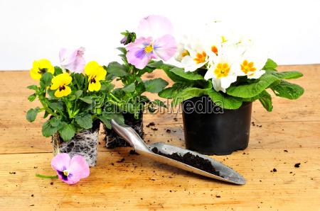 season, spring - 2831171