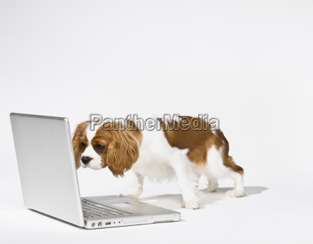 cute, puppy, with, laptop - 2834501