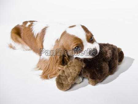 cute, puppy, with, toy - 2834663